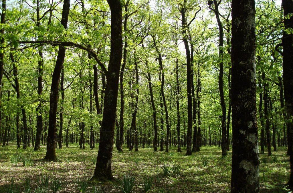 Κώστας Σκρέκας: Η ολοκλήρωση ανάρτησης των δασικών χαρτών είναι έργο εθνικής σημασίας