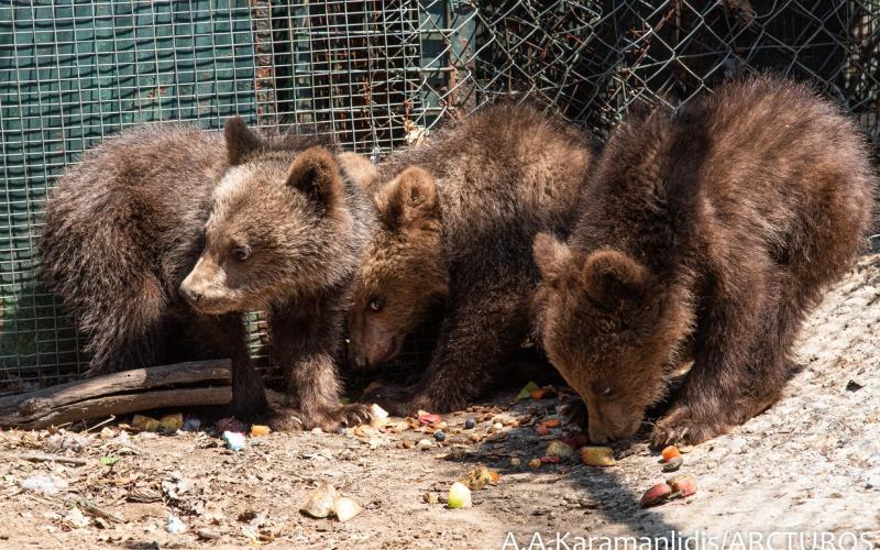 Ο Αρκτούρος φροντίζει έξι ορφανά άγρια ζώα